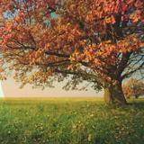 i-COMMUNITY-LIVING-SERVICES